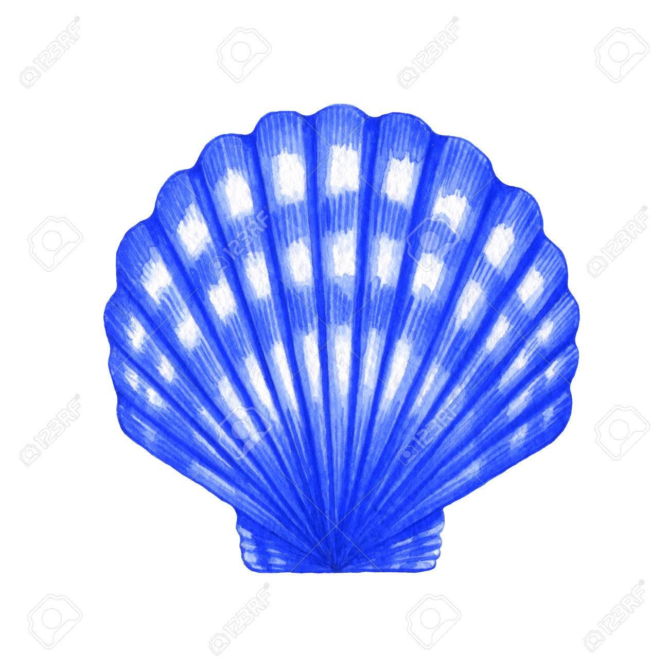 白い背景の上にホタテ貝殻の水彩画のイラスト の写真素材画像素材