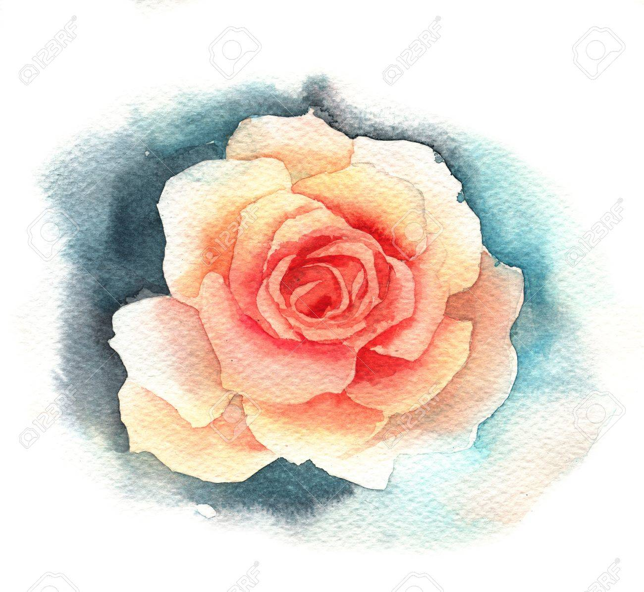 watercolor rose stock photo picture and royalty free image image