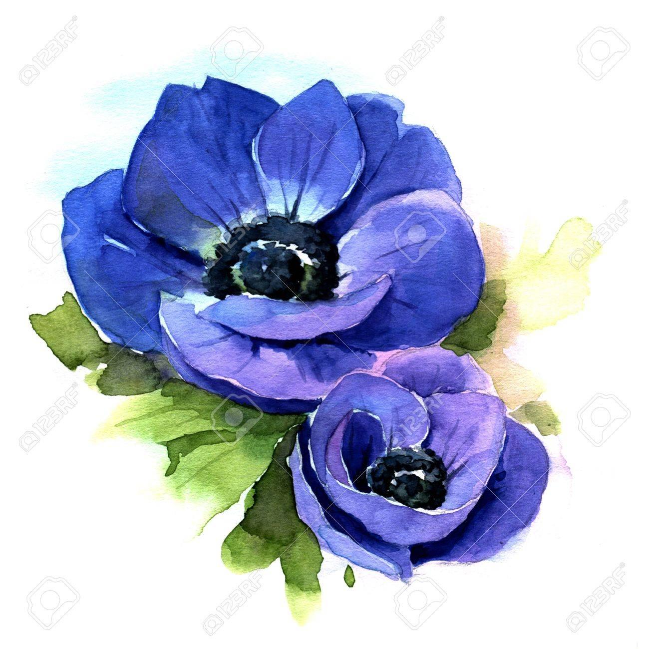 アネモネ 青い