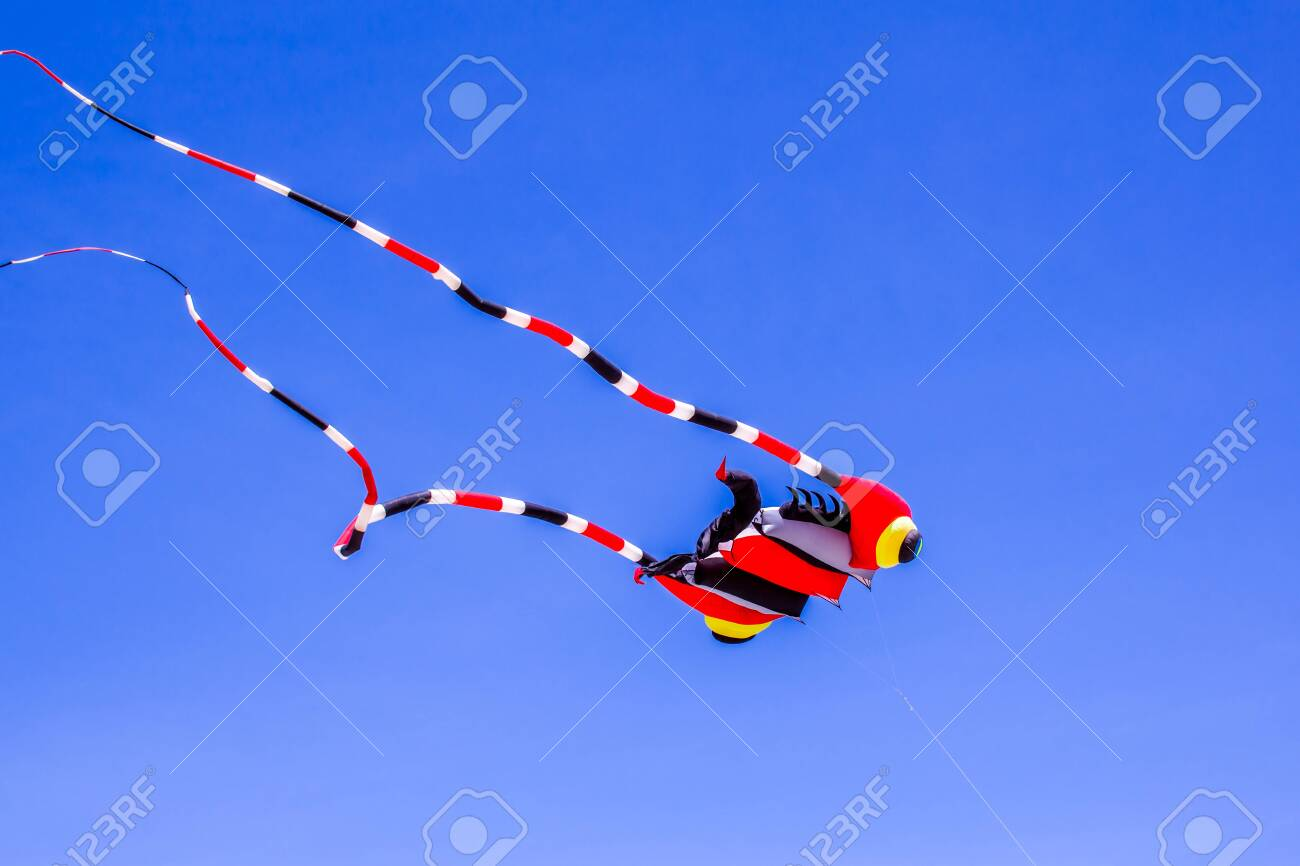 Beautiful kites in a kite festival. Full of color and flying against a vivid blue sky at the beach in summer. - 156588999