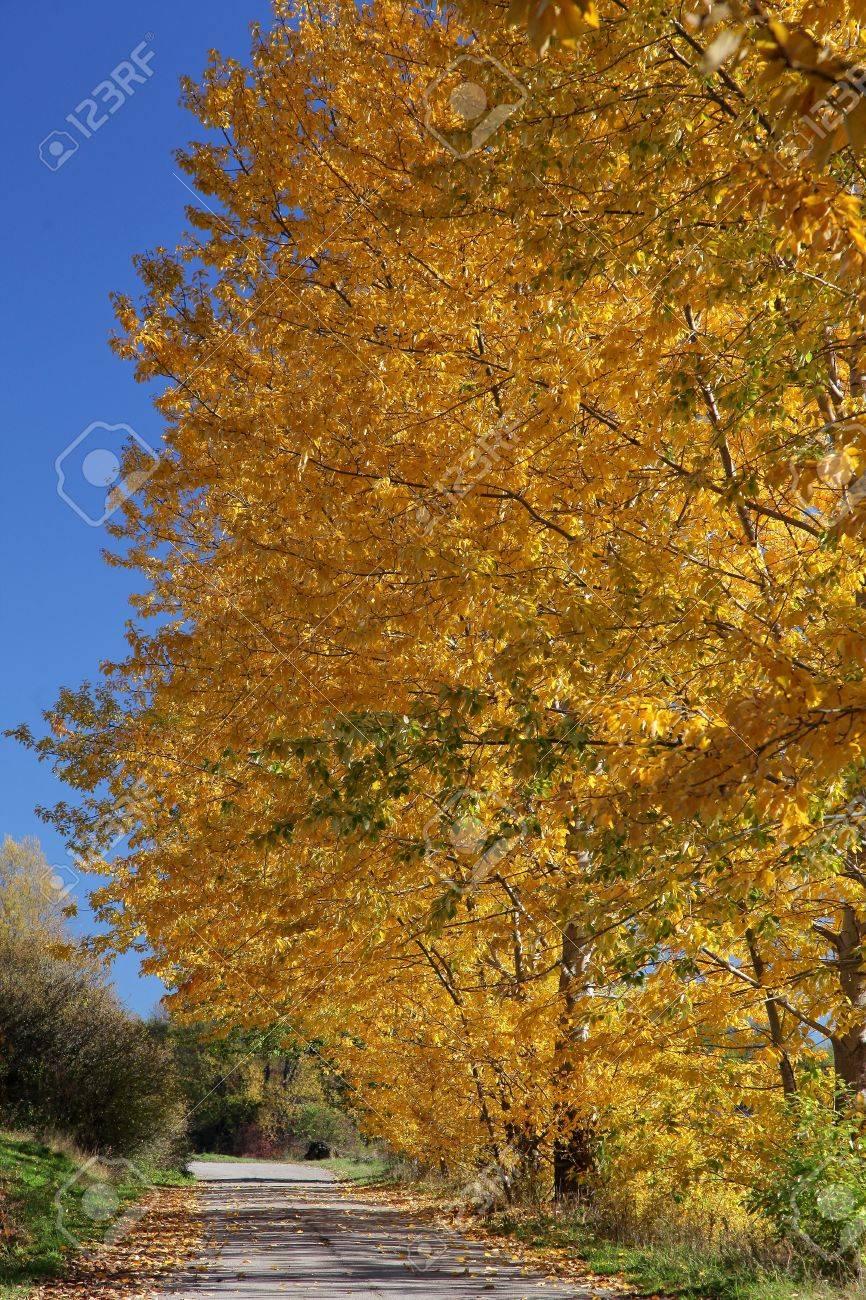 Autumn trees in region Liptov, Slovakia Stock Photo - 16268224