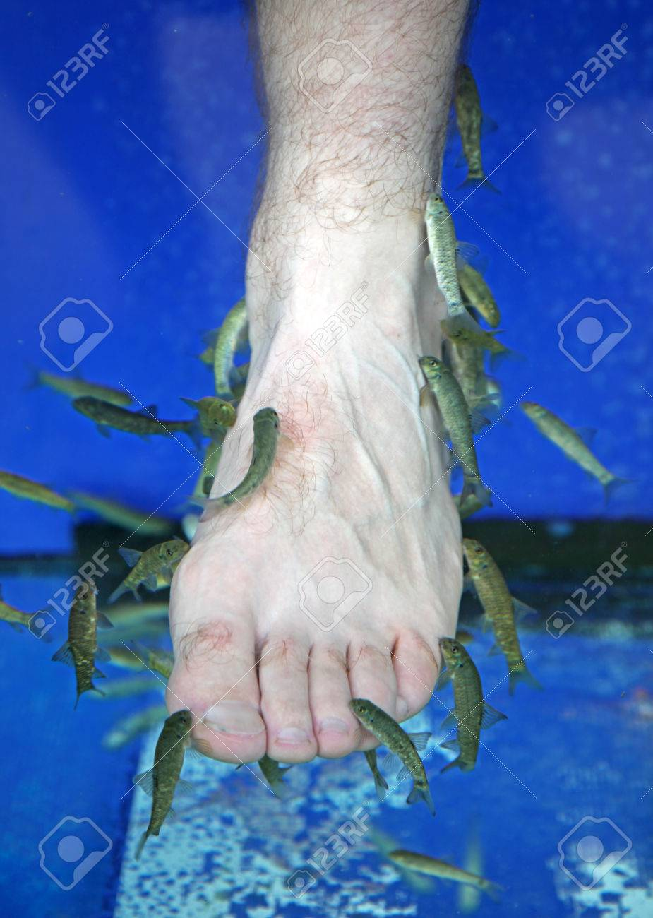 Doctor fish - fisha spa at Sunny beach, Bulgaria Stock Photo - 24234117