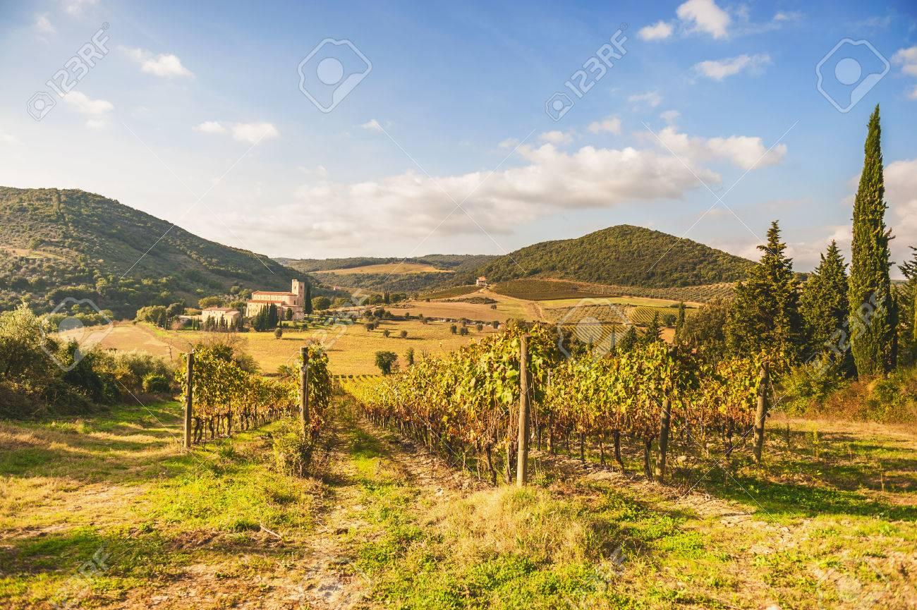 Italian medieval church between vineyards - 32724137