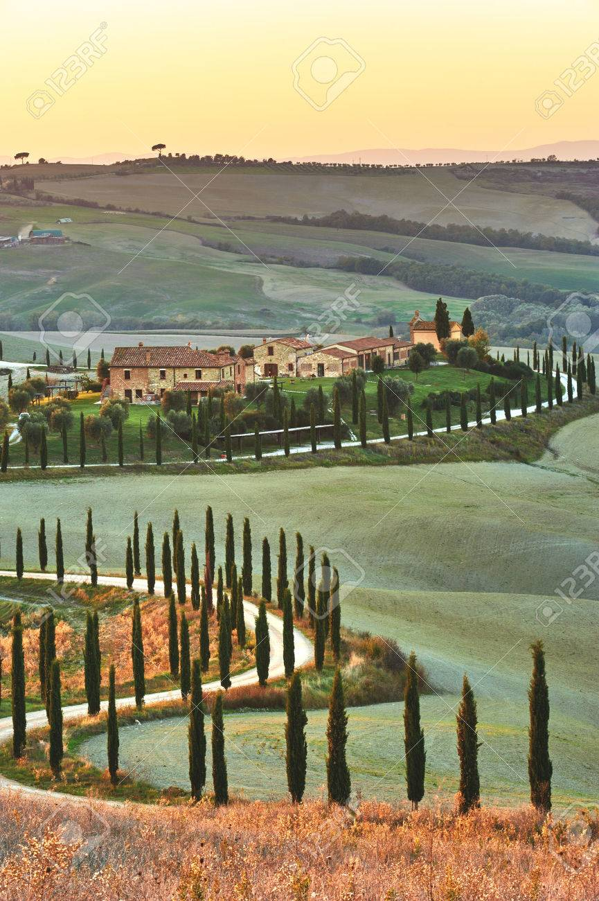 Cypress Tuscany in the beautiful landscapes of the setting sun. - 33479681
