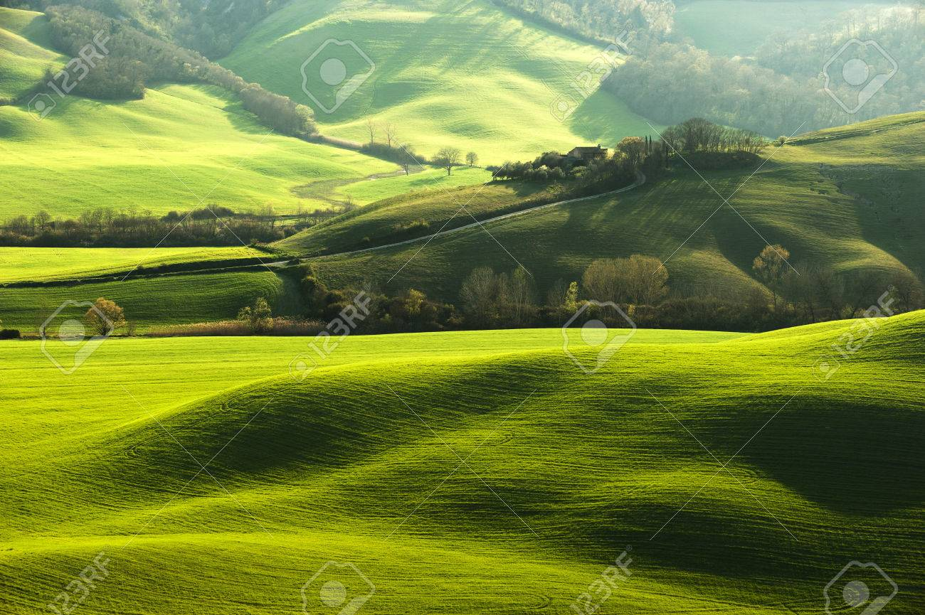 Pastoral green field with long shadows in Tuscany, Italy - 39267780