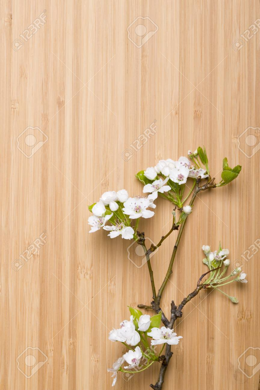 Background wood spring flower Stock Photo - 11035986