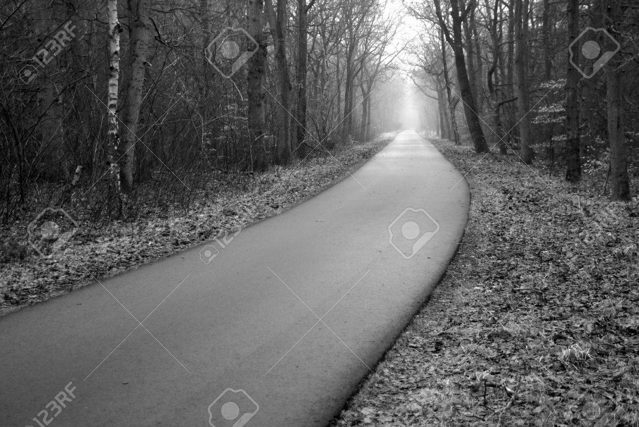 Creepy Foggy Forest Asphalt Road