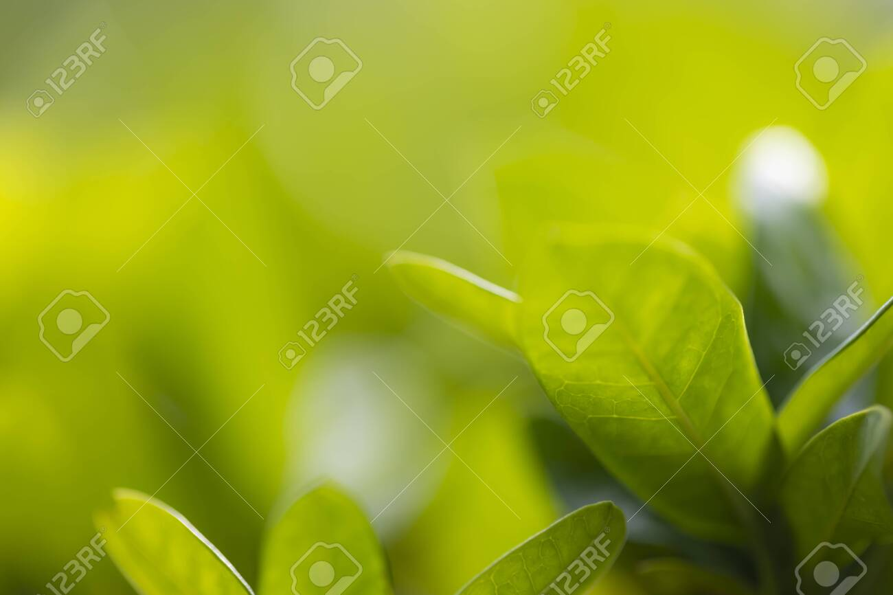Tree leaf background and texture, solf focus with macro lense. - 128423592