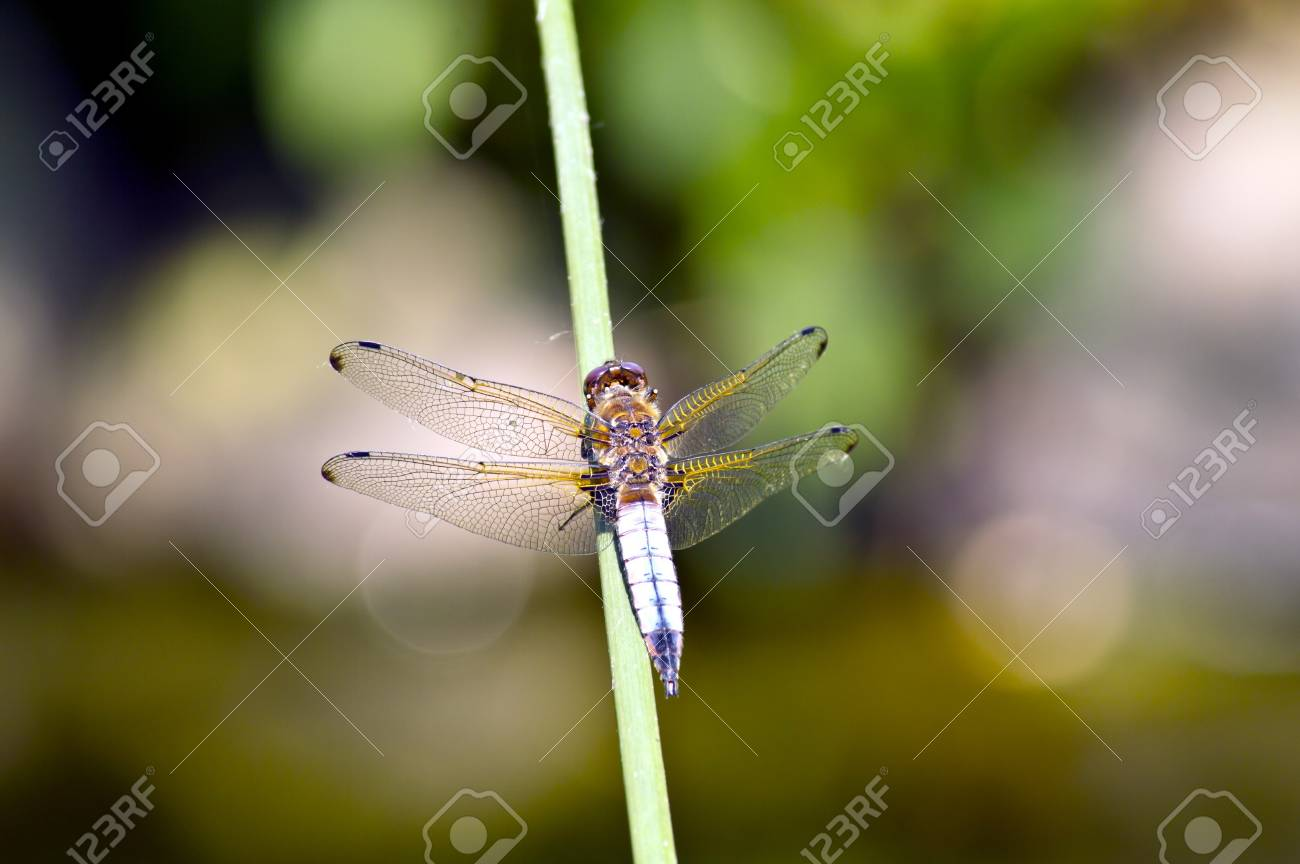 Dragonfly on water Stock Photo - 20314186