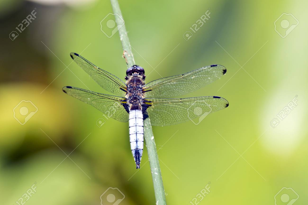 Dragonfly on water Stock Photo - 20314184