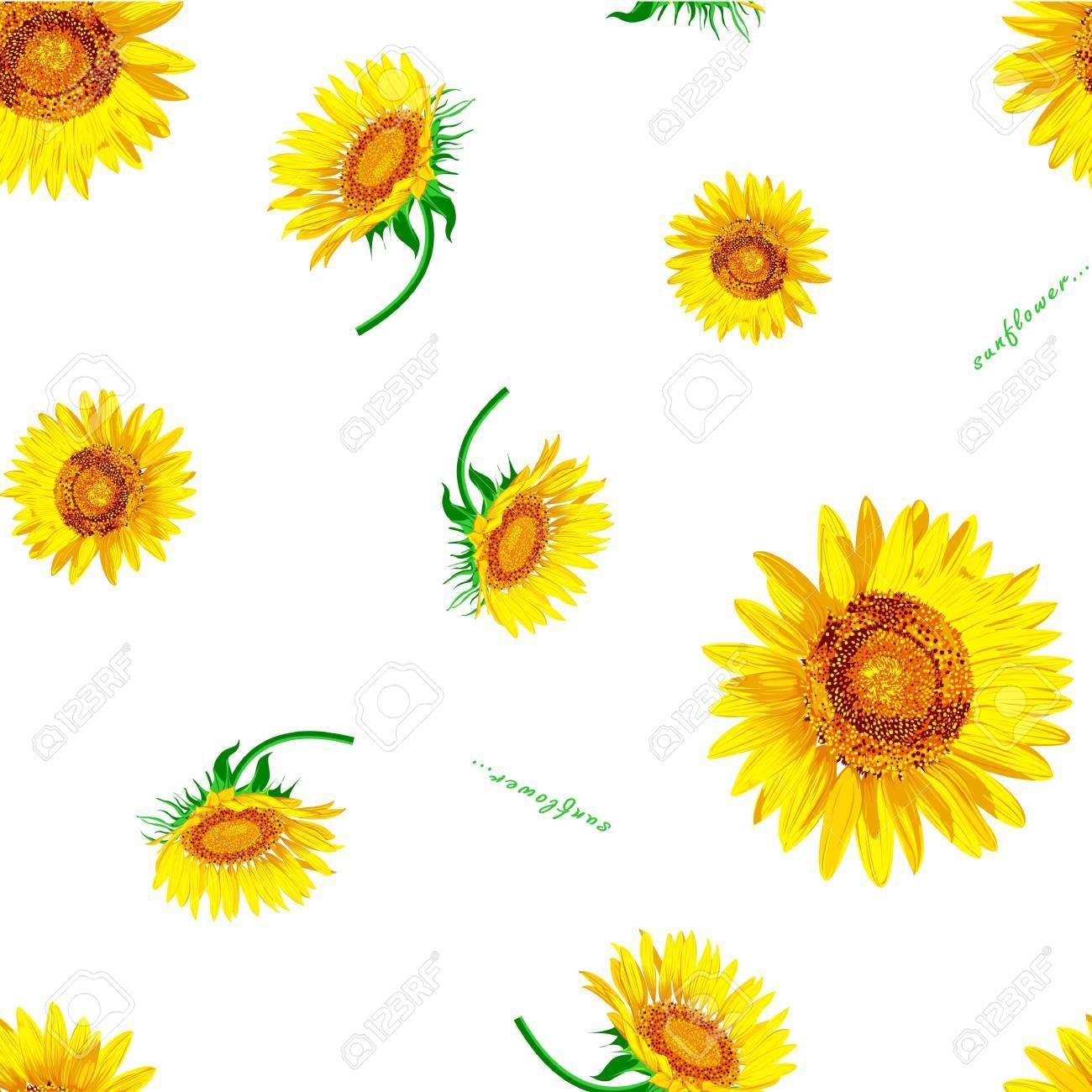 Sun flower Vector on the white background Stock Vector - 12756399