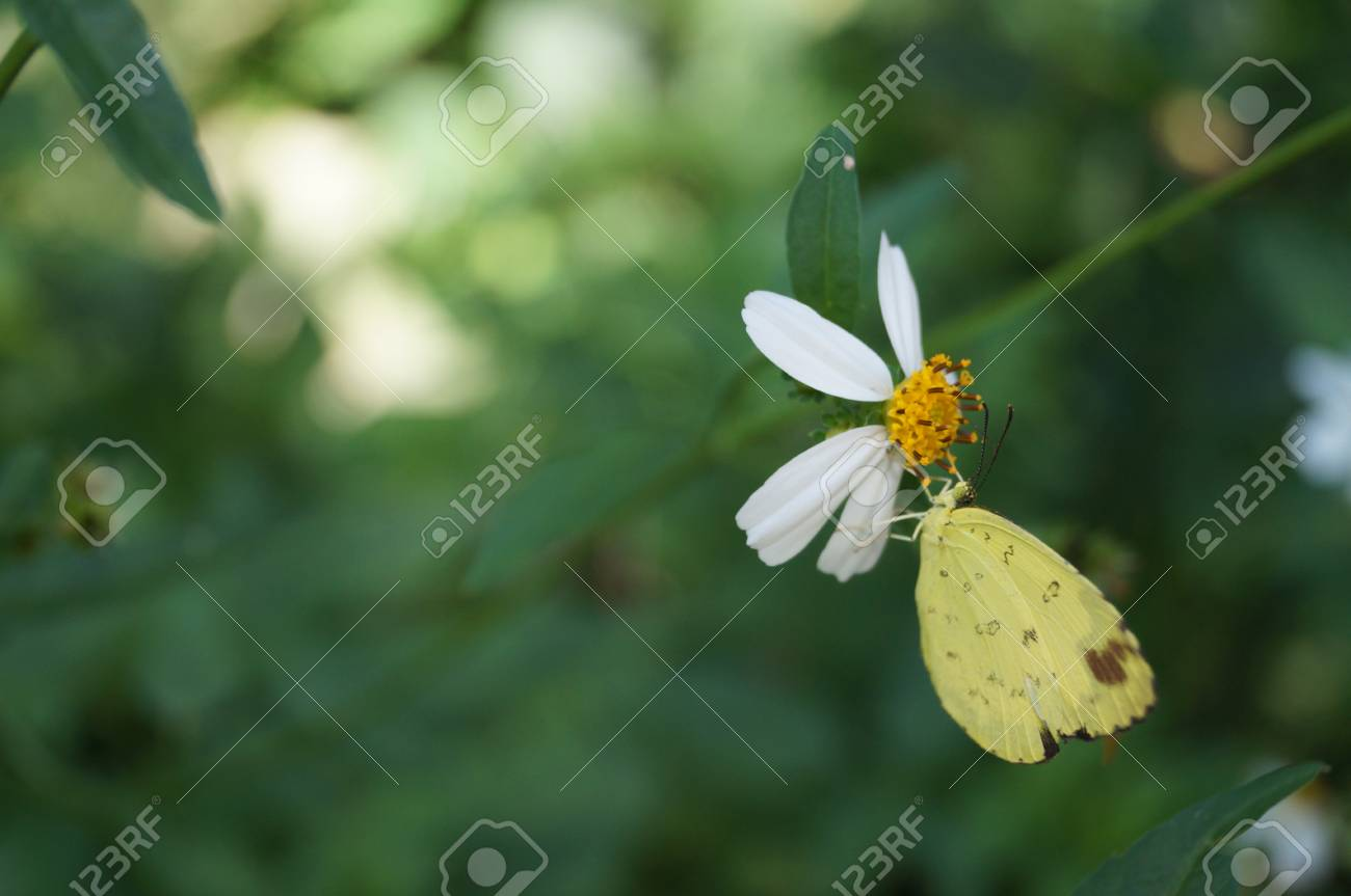 white flower with butterfly Stock Photo - 24645619