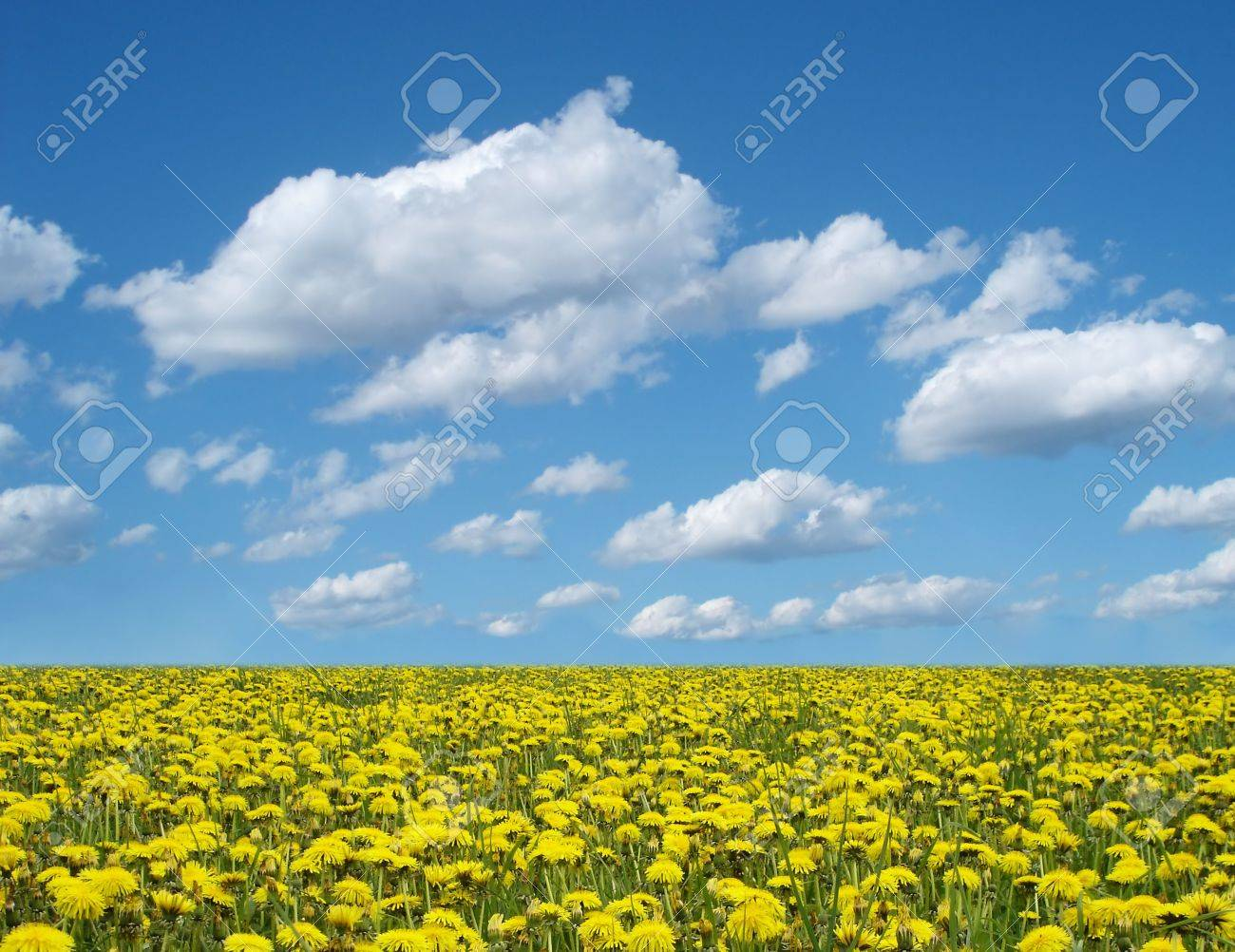 dandelion field and blue cloudy sky Stock Photo - 361751