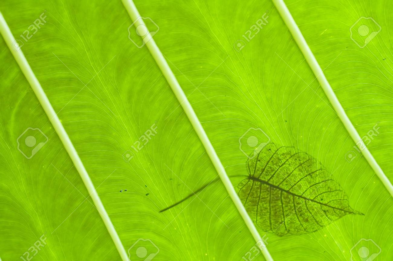 green leaves texture Stock Photo - 809760