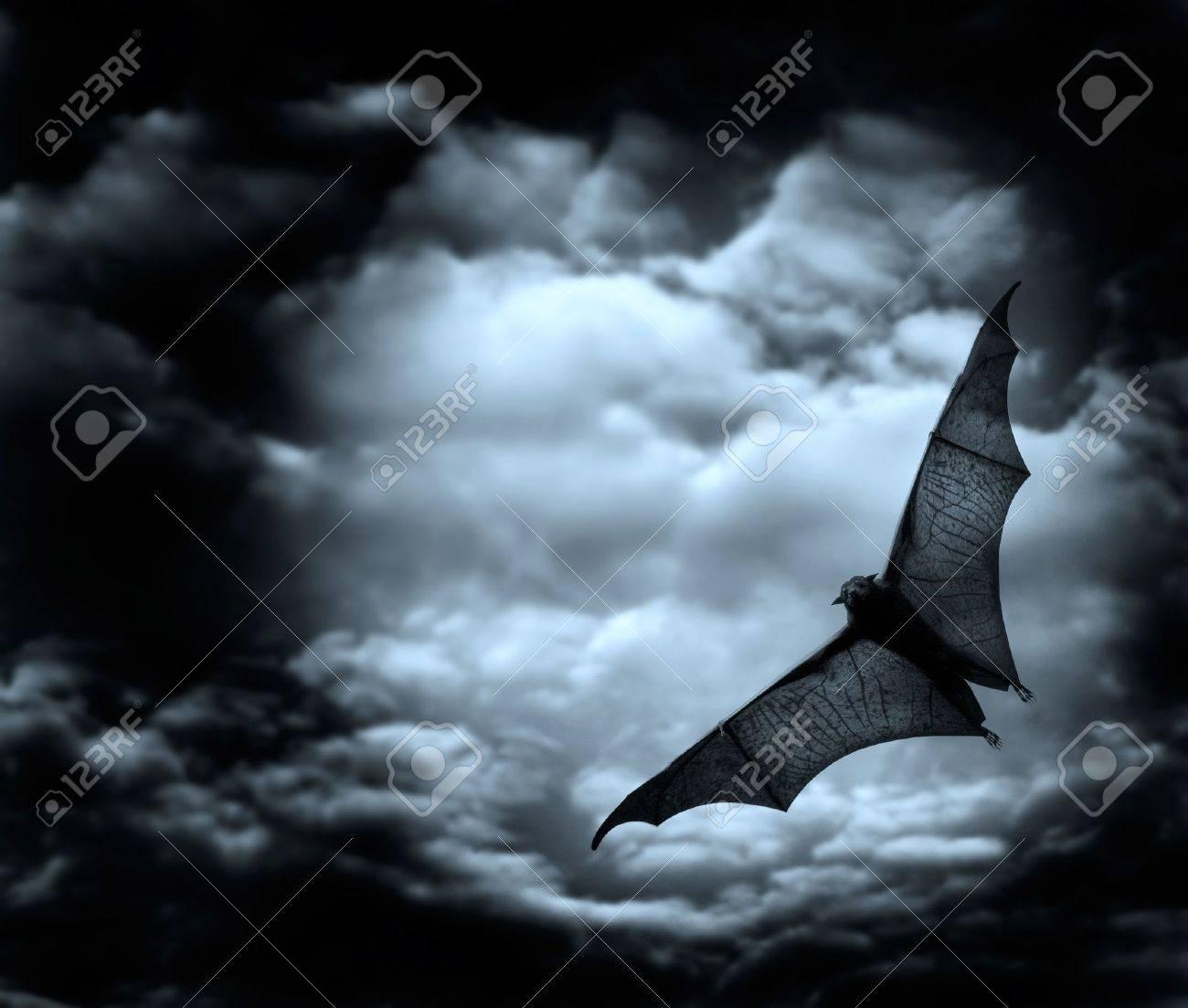 bat flying in the dark cloudy sky Stock Photo - 2718470