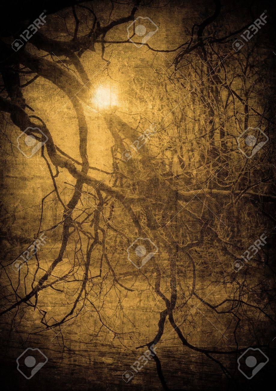 grunge image of dark forest, perfect halloween background Stock Photo - 7970808