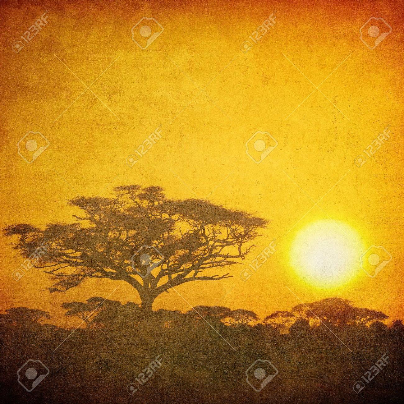 grunge image of a tree in savannah Stock Photo - 12084054