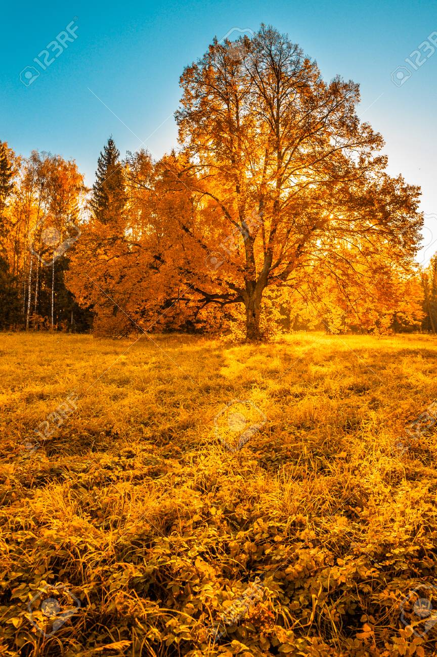 autunm tree in the park perfect fall scenery stock photo picture