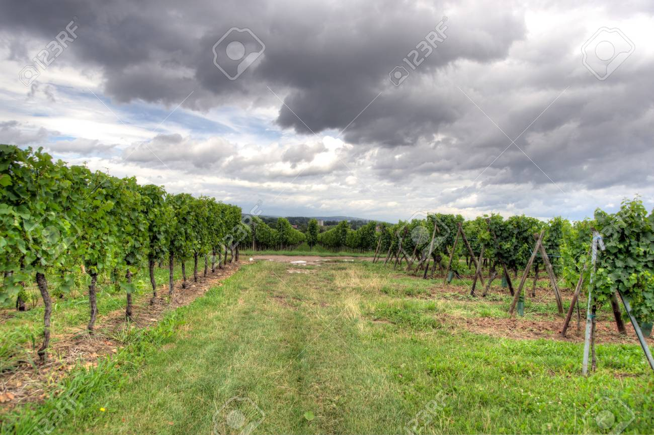 Hiking in Alsace with vinewyard views in France vacation Stock Photo - 22916348