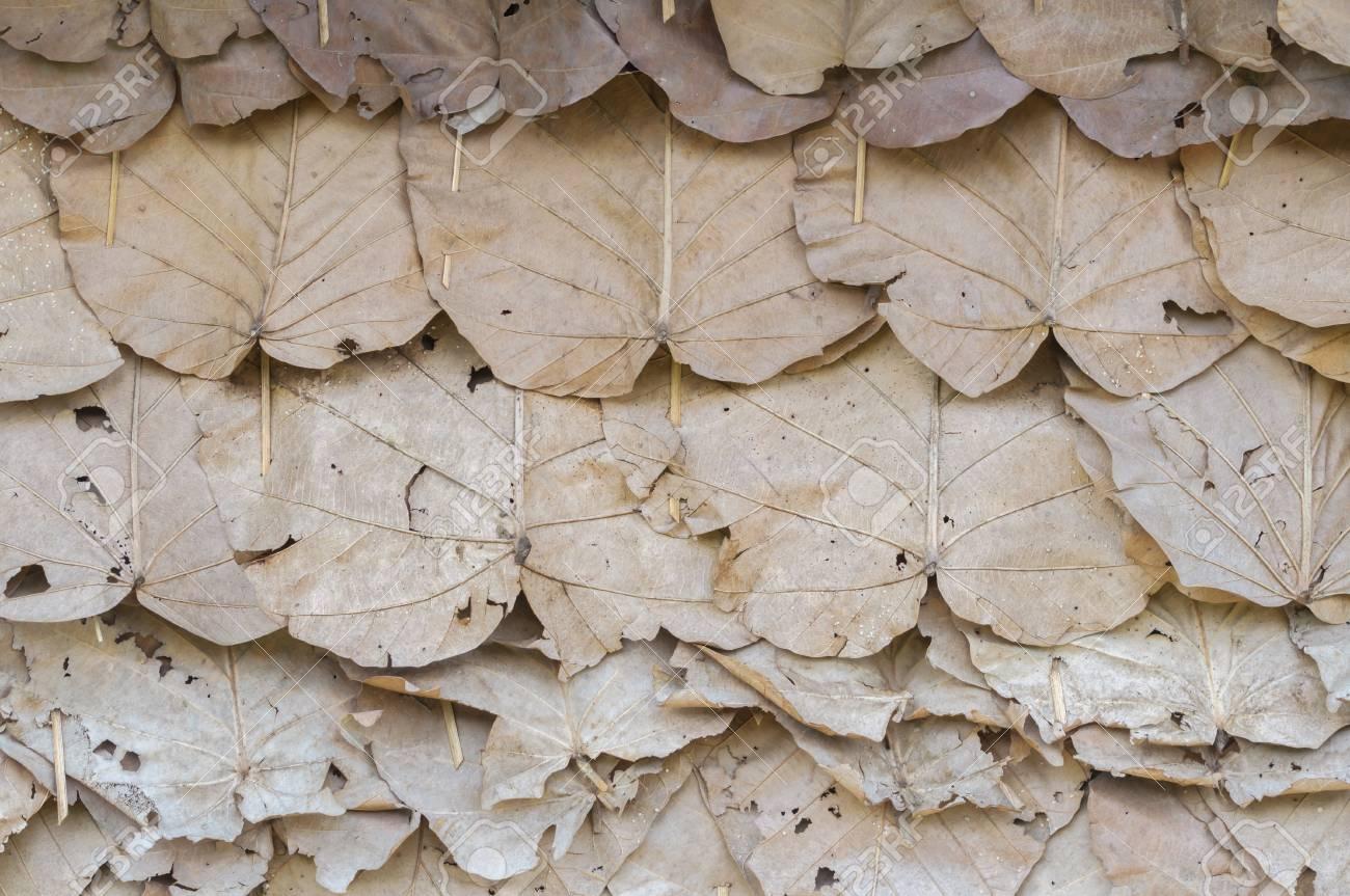 Front Trockenes Blatt Anordnen Und Verbinden Mit Bambus Lizenzfreie