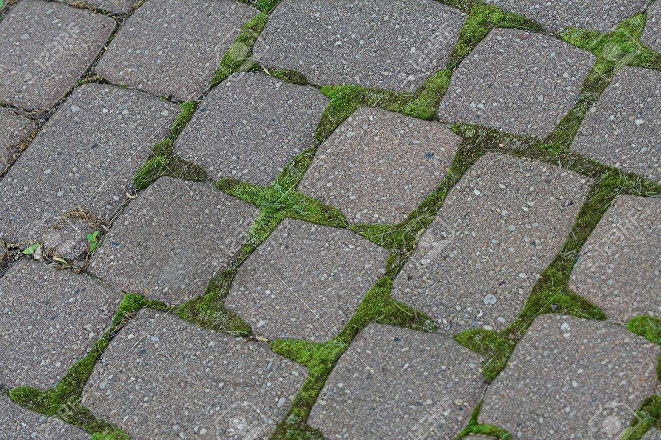 Cobblestone Patio With Moss Background Stock Photo   406162