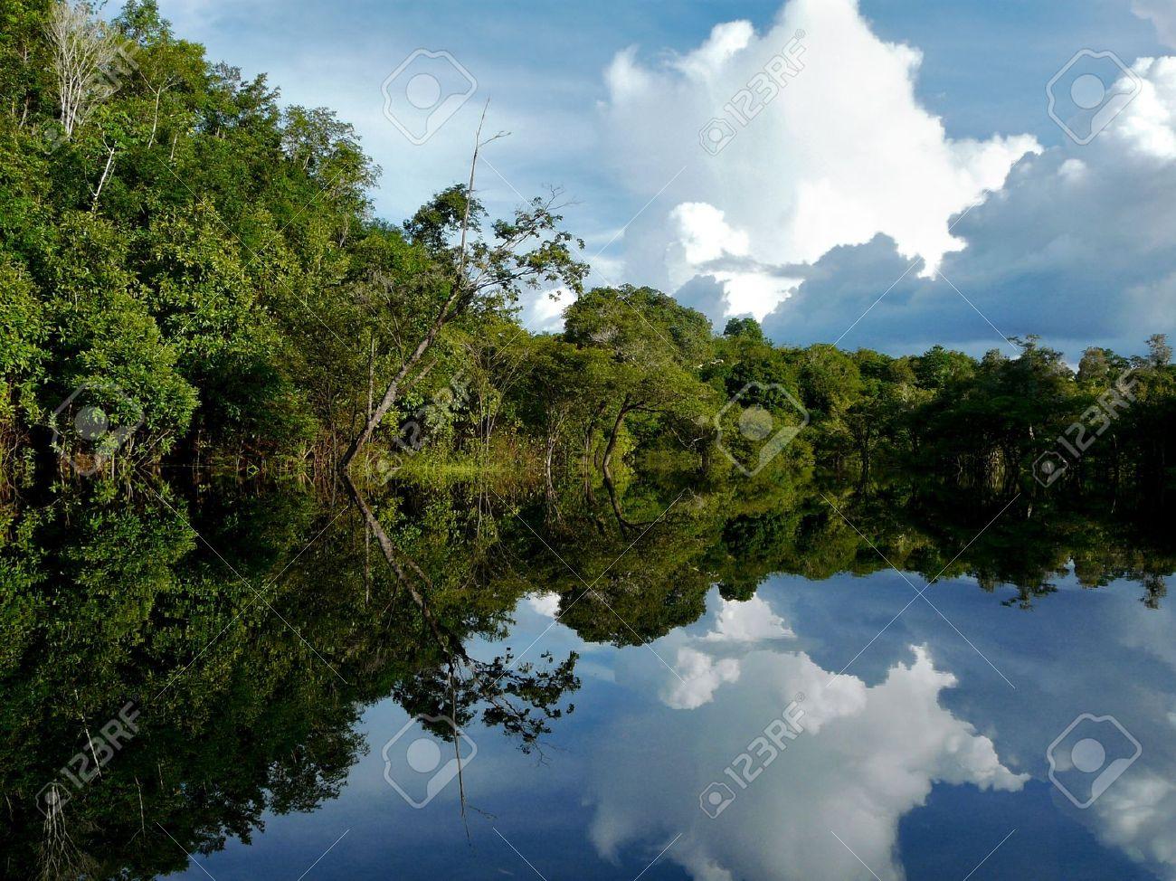 Reflections of Amazon river, Brazil Stock Photo - 9360591