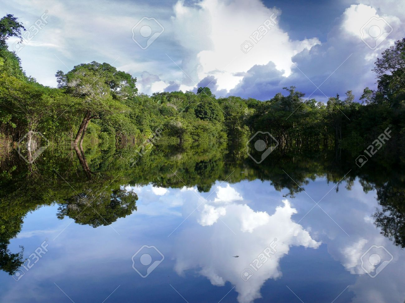 Reflections of Amazon river, Brazil Stock Photo - 9360602