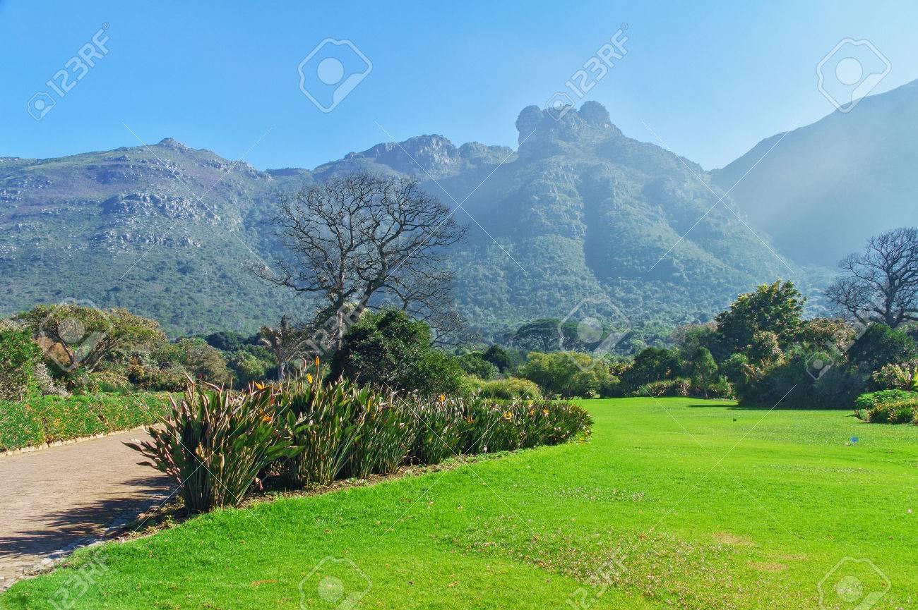 Kirstenbosch botanical gardens, Cape Town, South Africa - 24609435