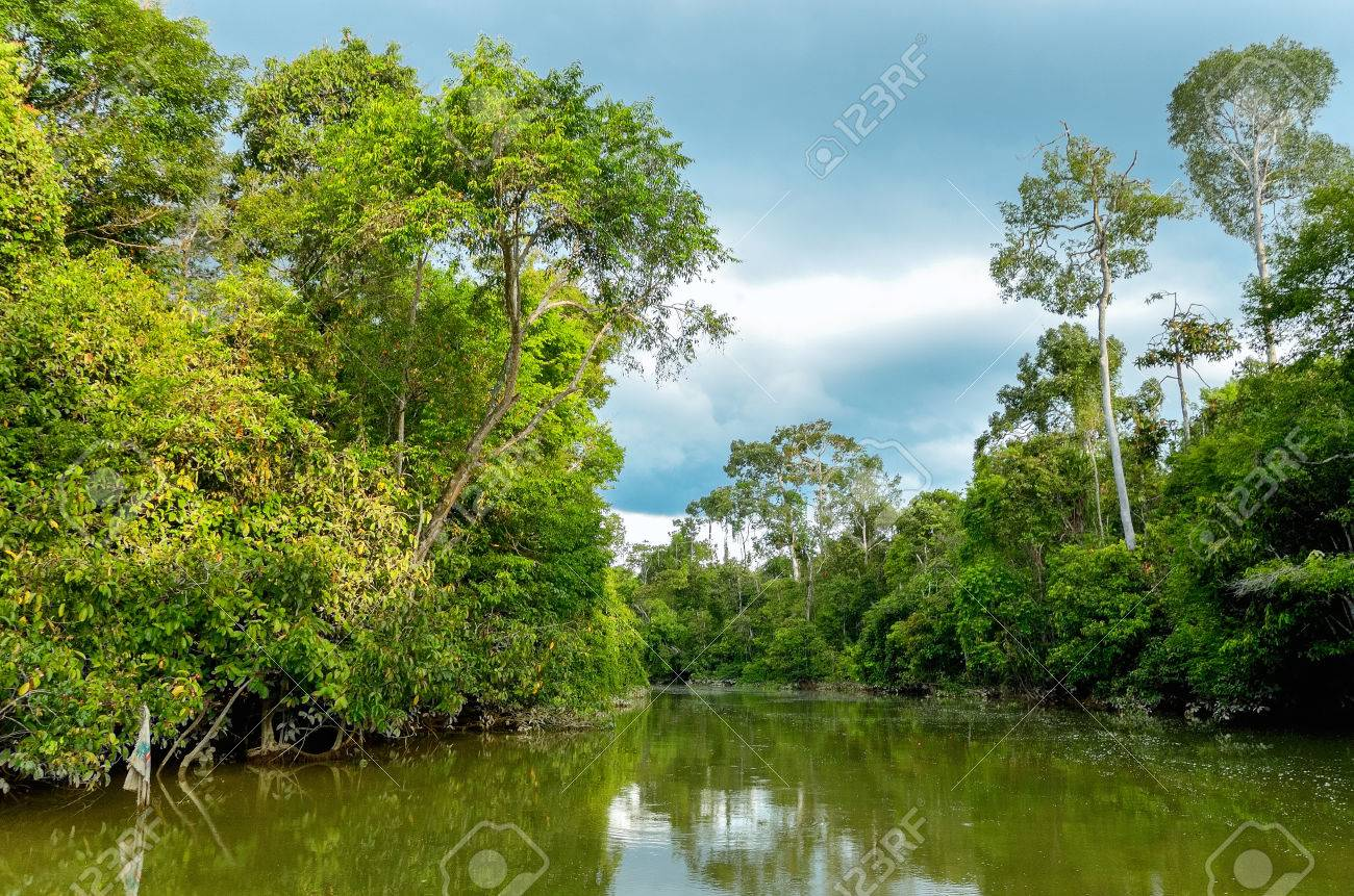 Kinabatangan river, Malaysia, rainforest of Borneo island - 33869359