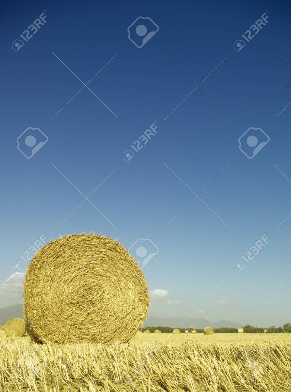 golden hayfield in a bright blue sky in chianti, tuscany Stock Photo - 1977934