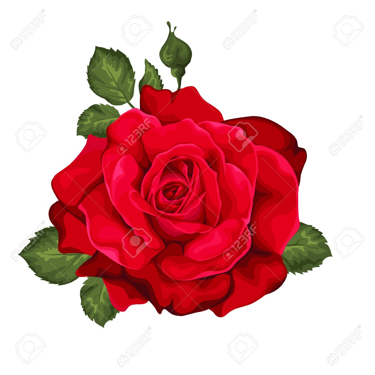 rose for valentine images u0026 stock pictures royalty free rose for