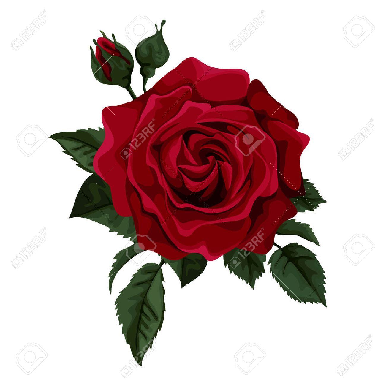 ::Desfile de Rosas AMDA::Hoy se presenta la Rosa Roja AMDA  34622923-hermosa-rosa-roja-aislado-en-blanco-perfecto-para-las-tarjetas-de-felicitaci%C3%B3n-de-fondo-y-las-invitacio