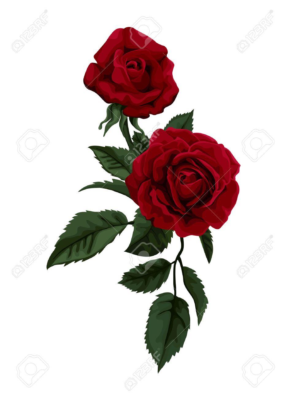 Magnifique Bouquet De Roses Rouges Isolé Sur Blanc Parfait Pour Le Fond Des Cartes De V Ux Et Des Invitations De Mariage Anniversaire
