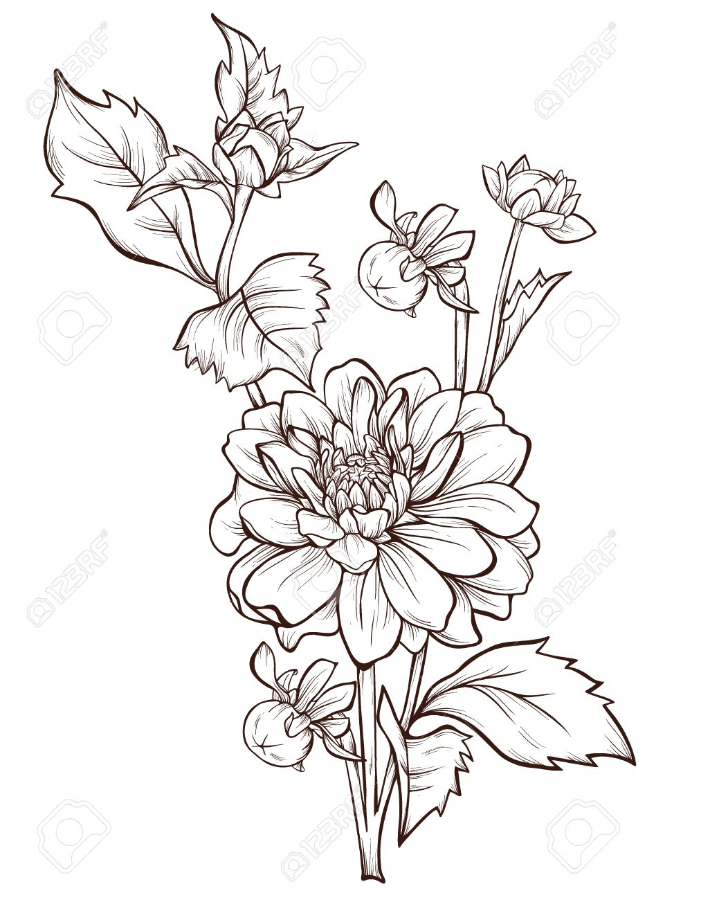 Vector Dahlia Flower Isolated On White Background Element For