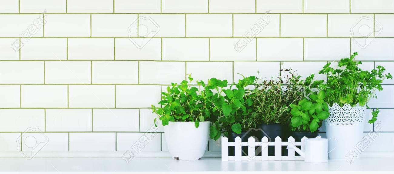 Minimalistische Küchengestaltung. Minze, Thymian, Basilikum, Petersilie -  aromatische Küche Kräuter in weißen Holzkiste auf Küchentisch, Backstein ...