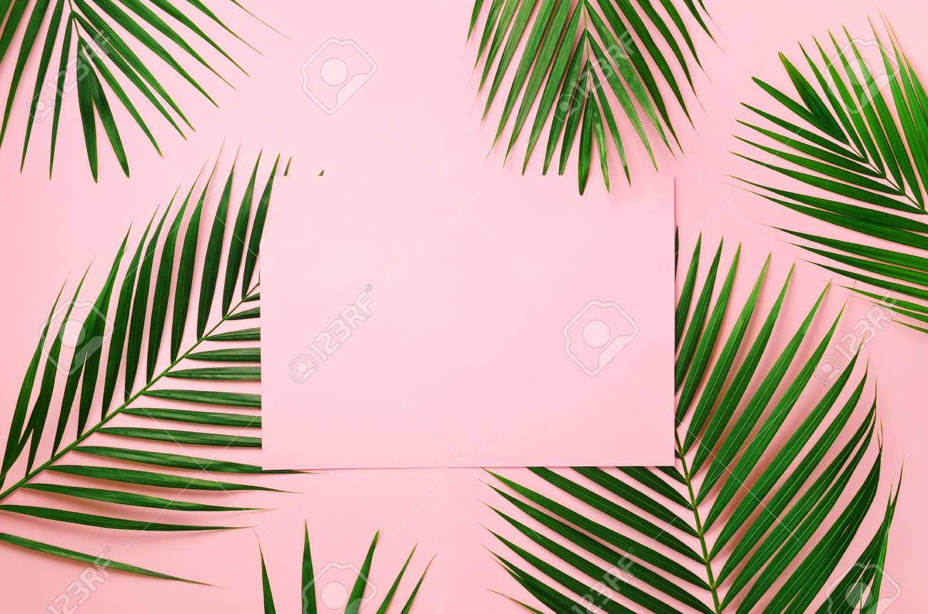 Tropical Palm Leaves On Pastel Pink Background With Paper Card Stock Photo Picture And Royalty Free Image Image 104932619 Palm leaf print, pink tropical art, tropical leaves, printable art, affiche scandinave, wall prints, nordic art, digital download wall decor. tropical palm leaves on pastel pink background with paper card