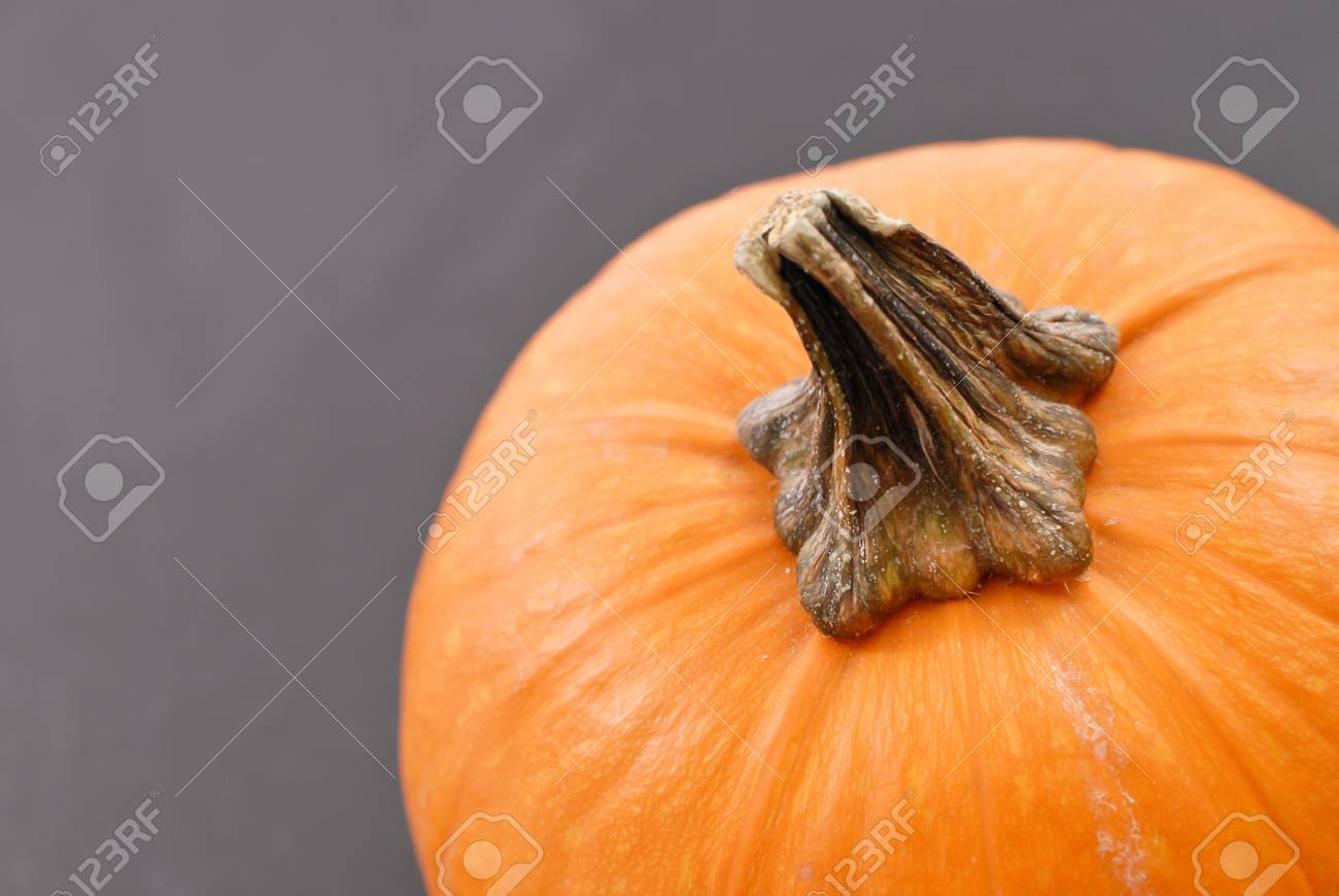 Pumpkin Stem Stock Photo Picture And Royalty Free Image Image 10775814