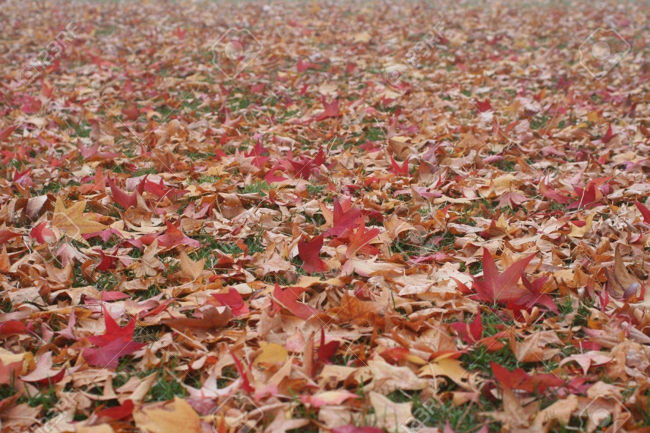 Many colorful fall leaves on the ground Stock Photo - 3905558