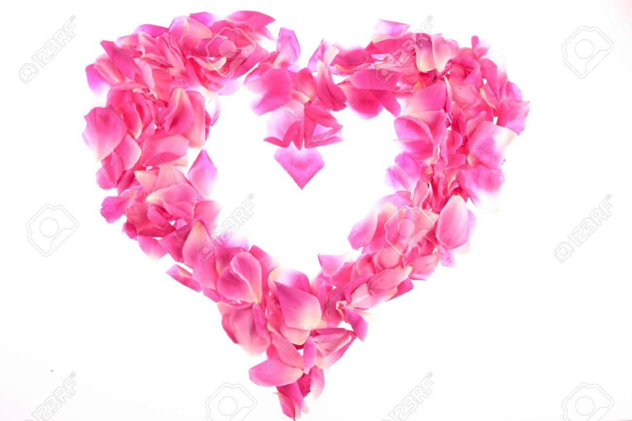 frame of pink rose petals frame of pink rose petals - 11707030