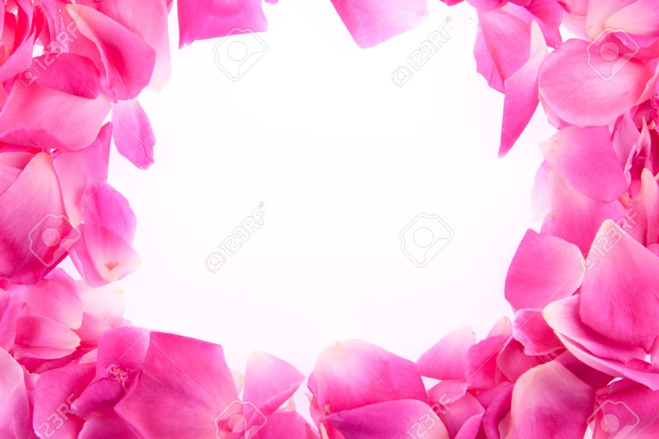 Frame Of Pink Rose Petals Stock Photo
