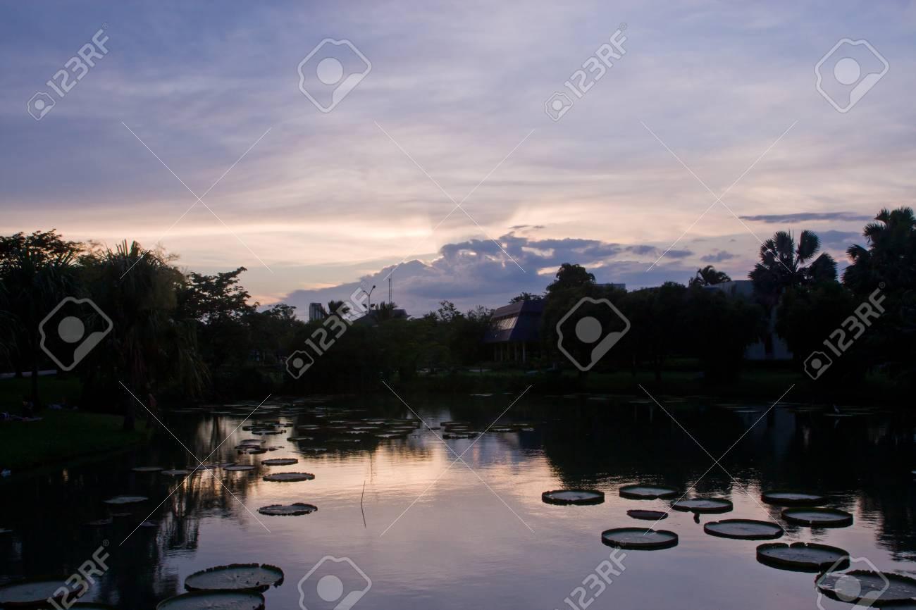 Landscape of victoria lotus in sun setting Stock Photo - 11873459