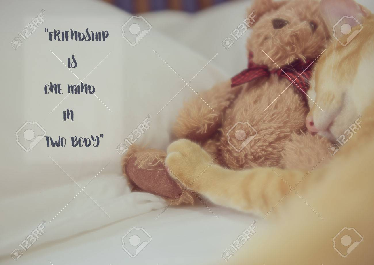 Inspiration quote with blurred ute cat and teddy bear background