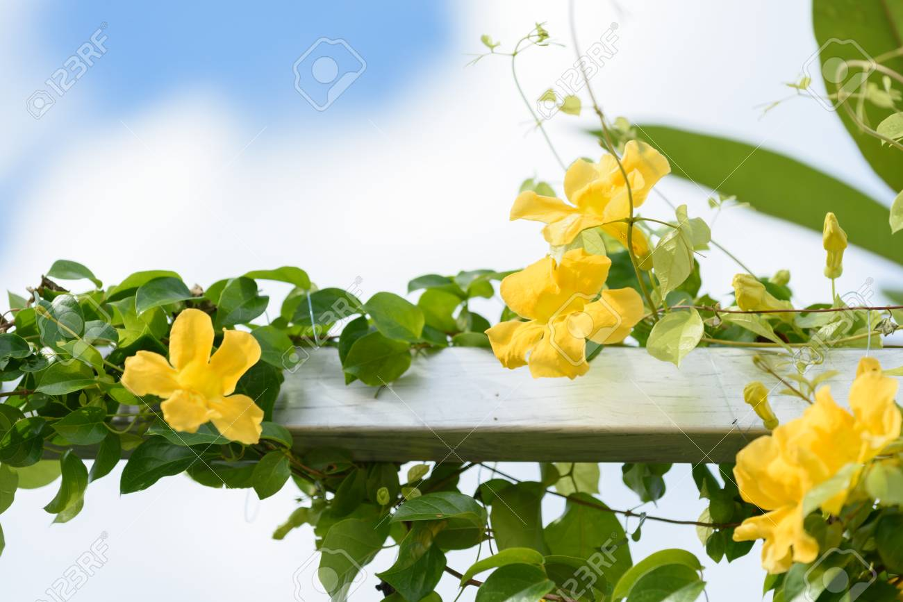 Metal Fence With Beautiful Yellow Flowers Against Summer Blue