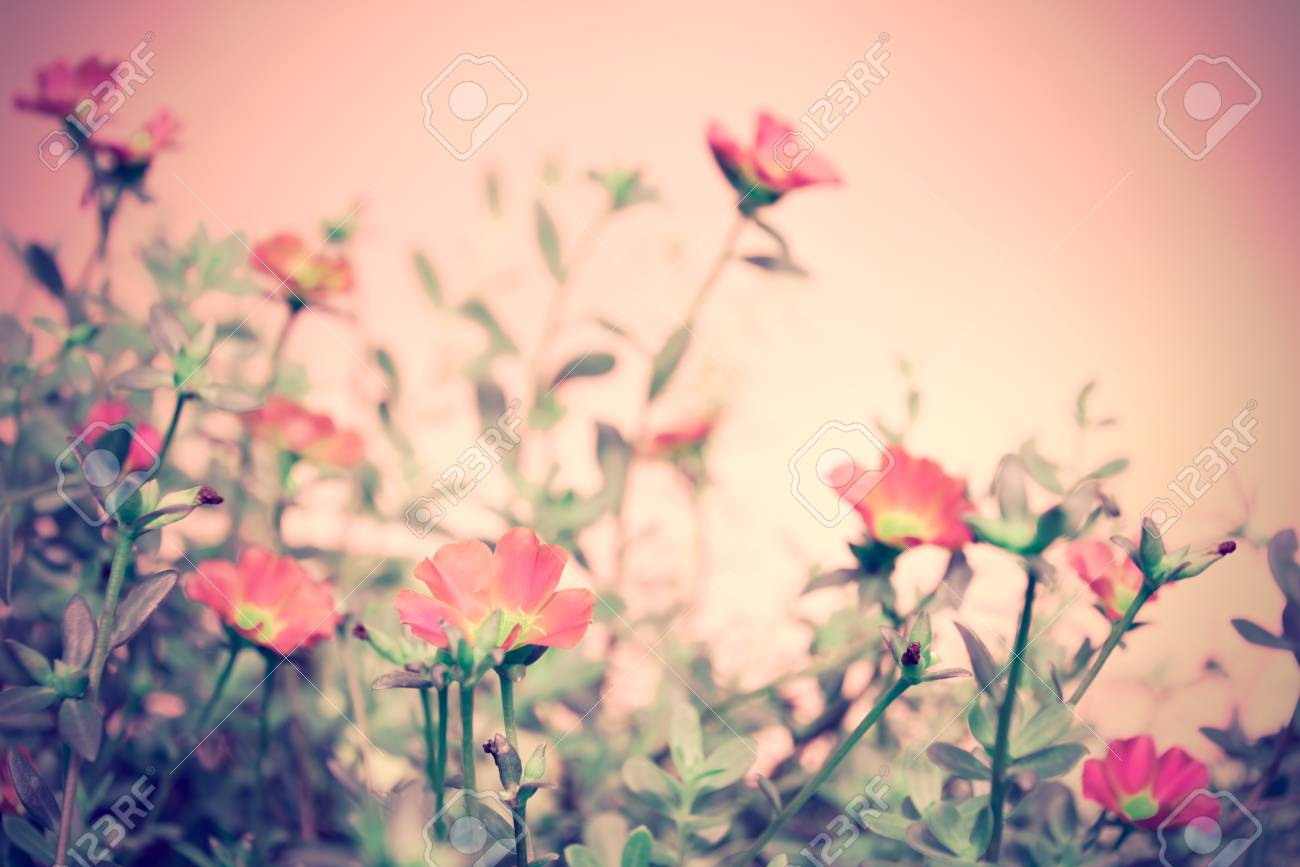 Vintage Beautiful Small Pink Flower Field With Soft Pastel