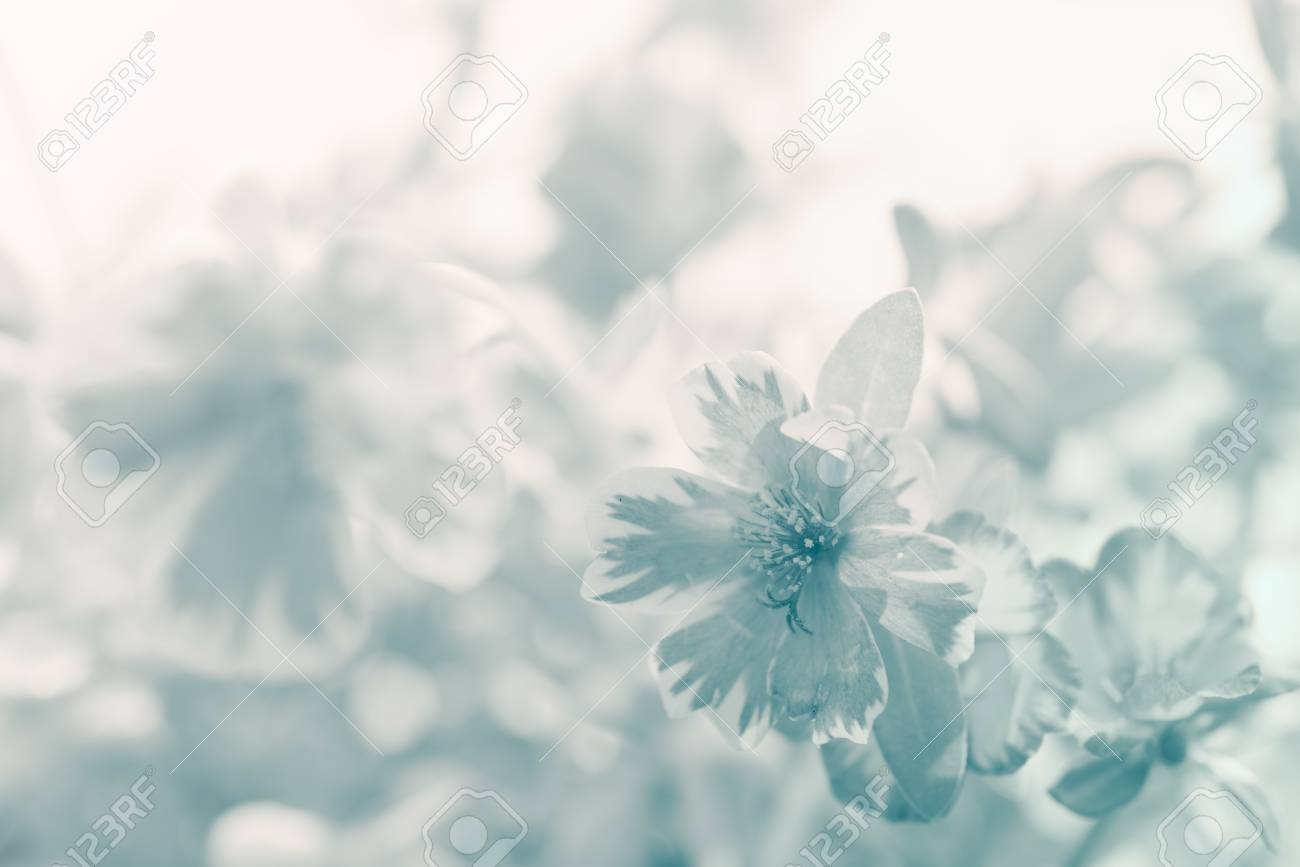 Fashion week Flower Pastel photography for woman
