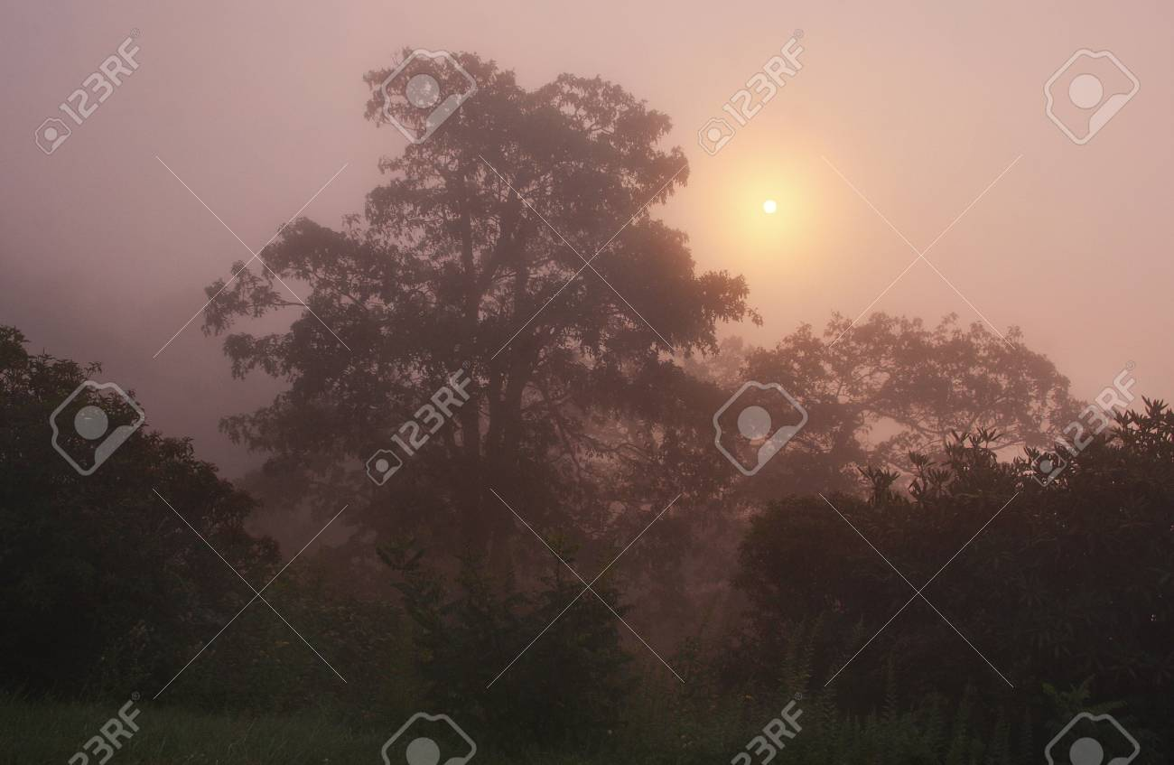 A foggy sunrise on the Blue Ridge Parkway Stock Photo - 18013267
