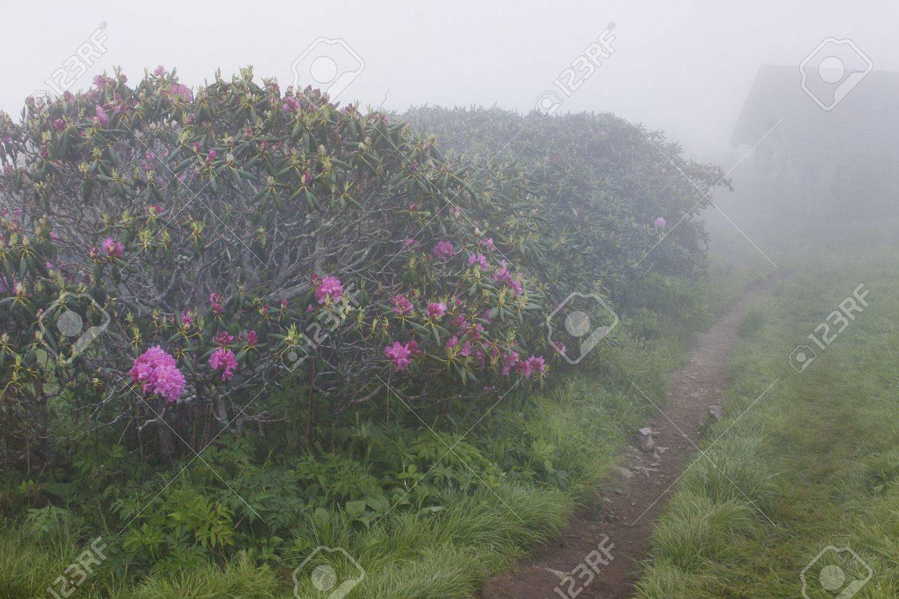 A foggy trail in Craggy Gardens Stock Photo - 18134448