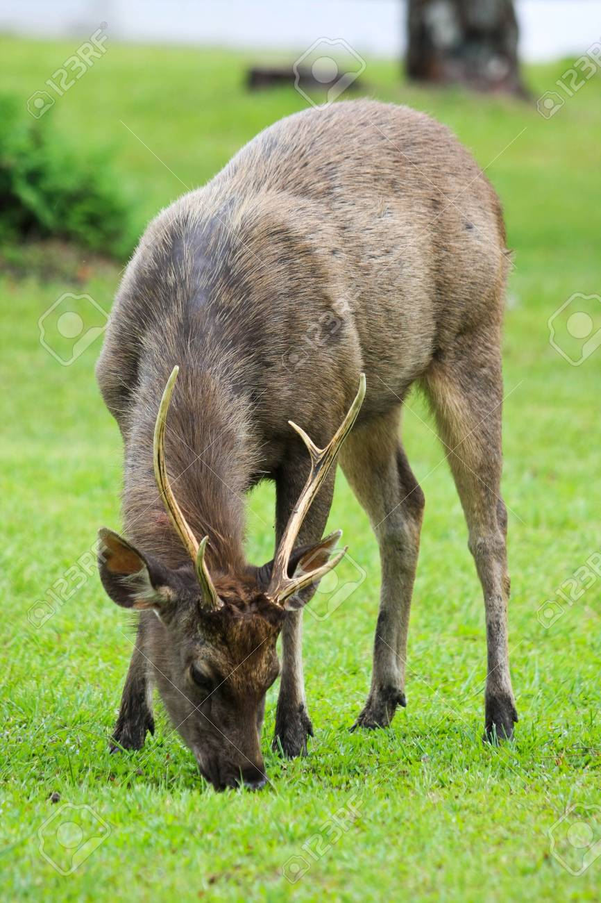 deer on the ground Stock Photo - 7381766