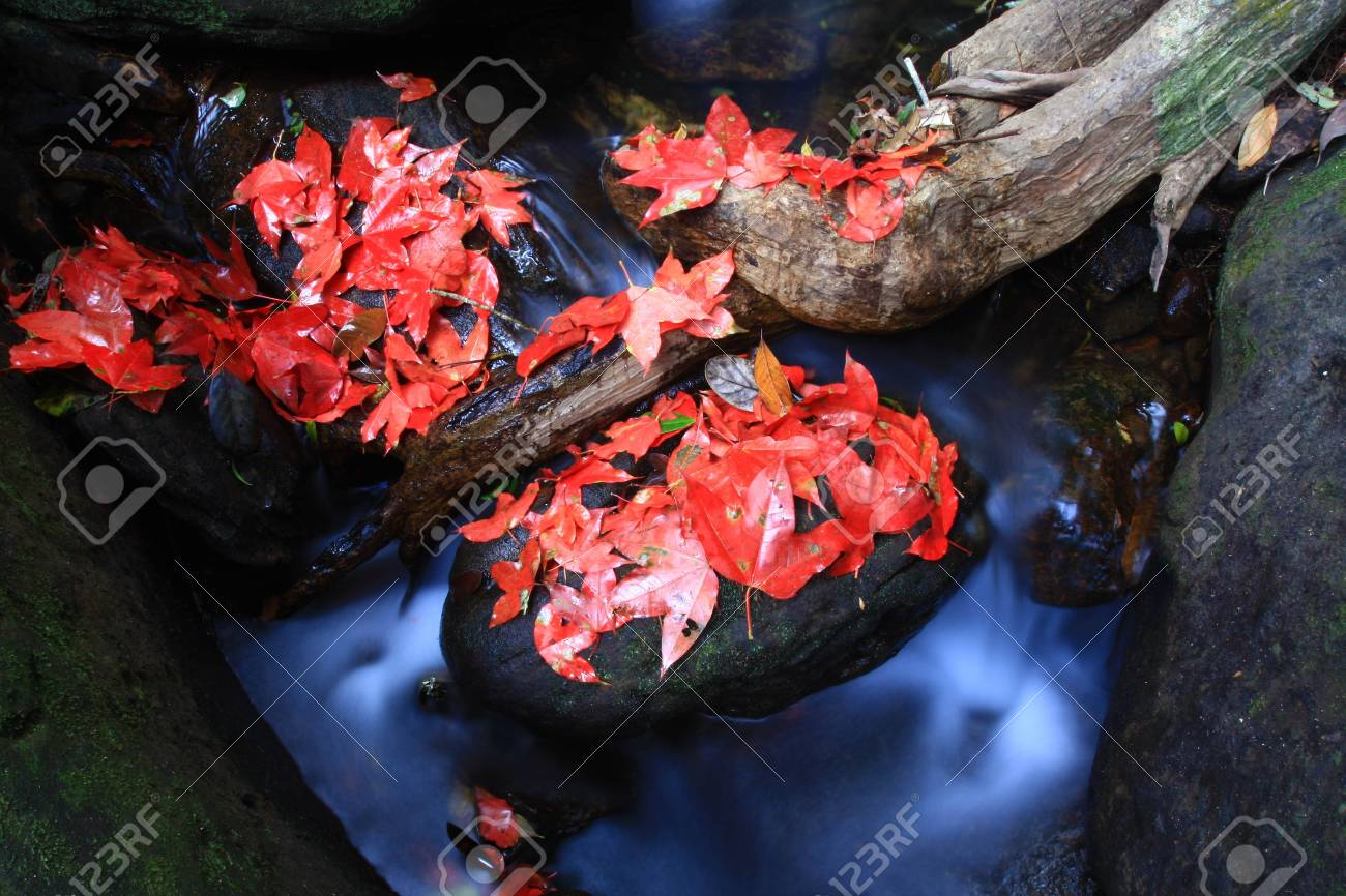 red maple on waterfall Stock Photo - 7381762