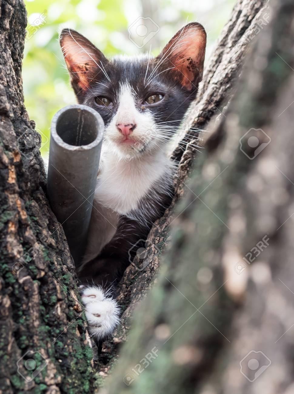 Pequeña Subida Gatito Negro En El árbol En El Jardín Al Aire Libre ...